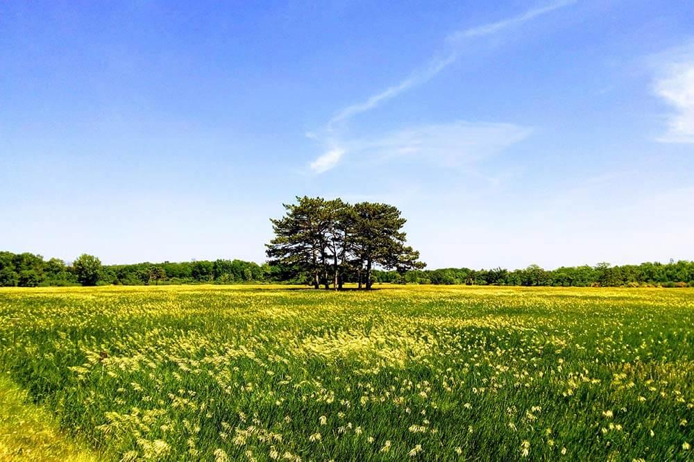 Аскания-Нова – жемчужина херсонской степи